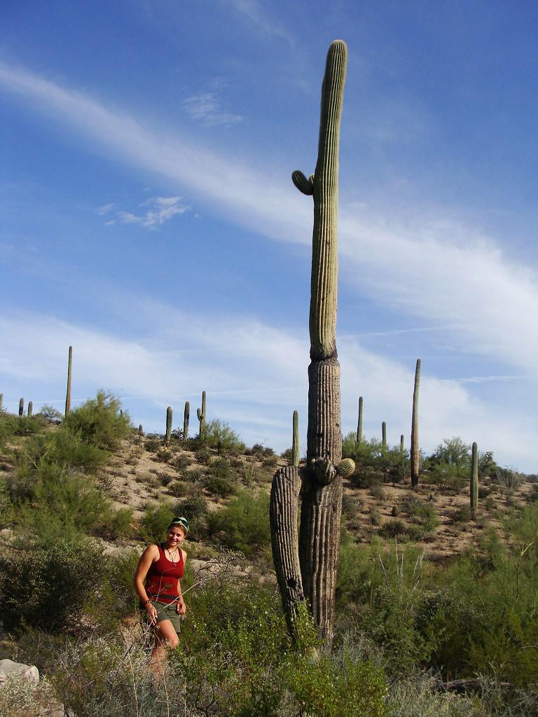 Kaktusy saguaro v Sonorské poušti - poměření výšky